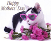 Happy Mother's Day, Cat White, Black, Pink Flowers