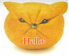 Hello , Persian Cat, Orange
