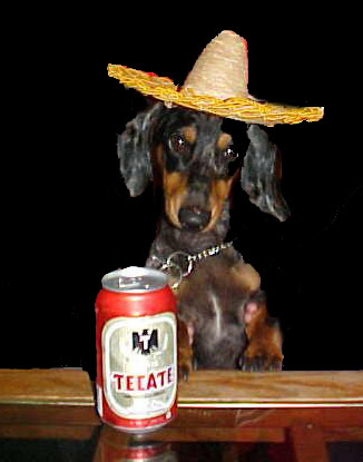 Cinco De Mayo Dog With Sambrero