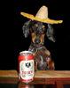 Cinco De Mayo Dog With Sambrero