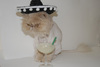 Cat With Sambrero and Drink