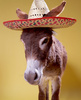 Happy Cinco De Mayo Donkey With Sambrero