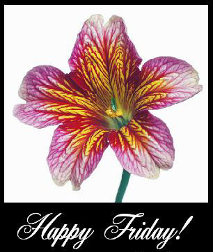 Happy Friday! flower