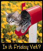 Is It Friday Yet? kitty mail box