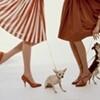 girly, dogs, dress