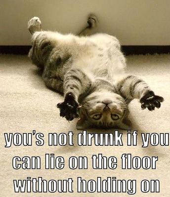 Funny Drunk Cat
