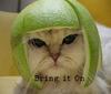 Helmet Cat