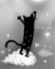 miss u funny black cat