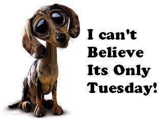 I can't believe its only Tuesday!