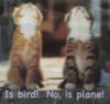 Is bird! No, is plane!