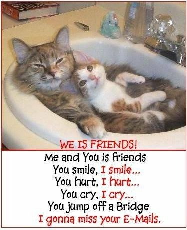 We Is Friends - Cats