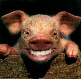 Funny-Pig-Smiling