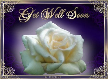 WHITE ROSE GET WELL