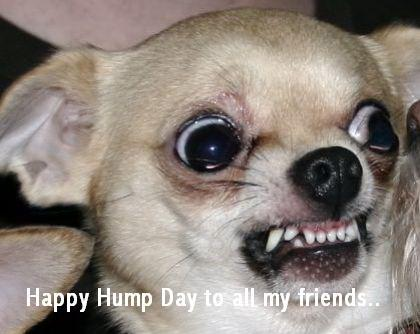 happy hump day to all my friends!