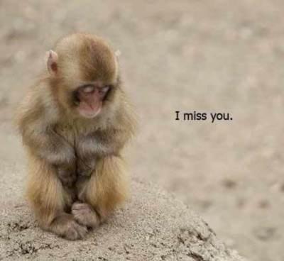 I miss you, monkey