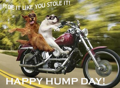 Ride it like you stole it! happy hump day!