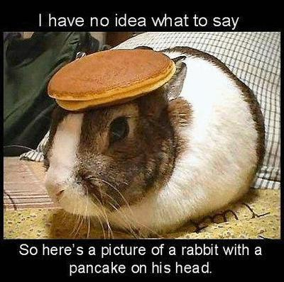 Rabbit With A Pancake On His Head