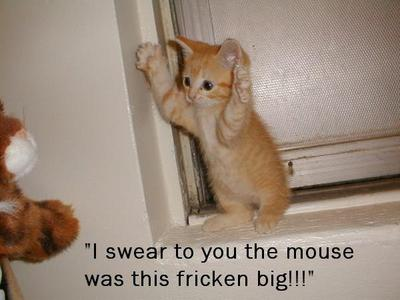 I Swear The Mouse Was This Fricken Big - Kitty