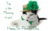 Kitten St Patrick's Day