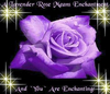 A Lavender Rose Means Enchantment